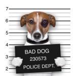 pes neposlucha