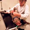 Najbežnejšie choroby u psov