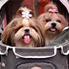 Nevinné zábavky psov – pozor na ne!